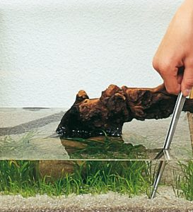 Sázení akvarijních rostlin